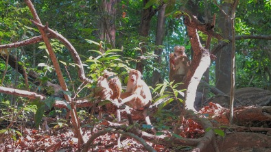 Udawatta Kele - Home to Torque Macaque
