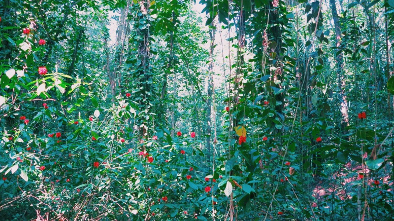 Incredible flora and fauna in the forest.